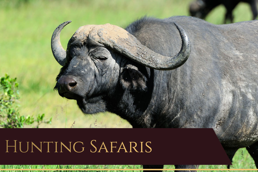 Dries van Coller Hunting Safaris