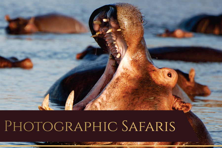 Dries van Coller Photographic Safaris